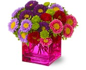 Mad about Magenta in Bedford MA, Bedford Florist & Gifts