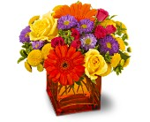 Teleflora's Another Year Bolder in Greensboro NC, Send Your Love Florist & Gifts