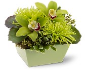 Pacific Palisades Flowers - Go Green - Edelweiss Flower Boutique