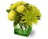 Teleflora's Green Light in Charlotte NC, Starclaire House Of Flowers Florist