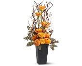 Witch's Brew in West Hill, Scarborough ON, West Hill Florists