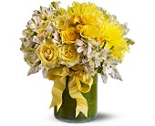 Lemon Aid in Charlotte NC, Starclaire House Of Flowers Florist