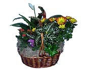JoJo's House Plant Basket in Brooklyn NY, David Shannon Florist & Nursery