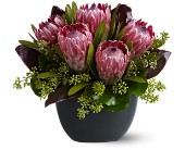 Positively Protea in Mississauga ON, Euro Flowers