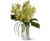Teleflora's Orchid Elegance in West Los Angeles CA, Sharon Flower Design