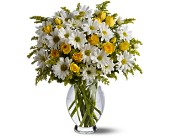 Teleflora's Daisy Days Deluxe in Maple ON, Jennifer's Flowers & Gifts