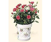 Rose Gazebo Cache pot in New Britain CT, Weber's Nursery & Florist, Inc.