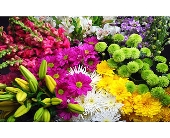 Mixed Cut Flowers, picture