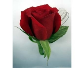 Single Rose Boutonniere - Red in Indianapolis IN, Gillespie Florists