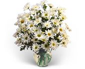 Delightful Daisies in Largo FL, Rose Garden Flowers & Gifts, Inc