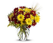 Fall for Daisies in Augusta GA, Ladybug's Flowers & Gifts Inc
