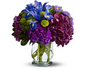 Brilliant Beauty in Bound Brook NJ, America's Florist & Gifts