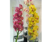 Orchids Under Glass in Westlake Village CA, Thousand Oaks Florist