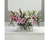 Portland Stargazer Vase in Portland, Oregon, Portland Florist Shop