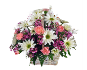 Pink & White Daisy Basket in Indianapolis IN, 317 Flowers