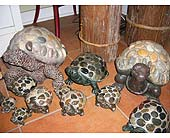 Cement Turtles in Templeton CA, Adelaide Floral