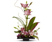 Imagination Blooms in Alameda CA, South Shore Florist & Gifts