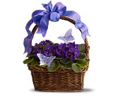 Violets and Butterflies in Watertown NY, Sherwood Florist
