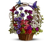 Dancing Butterflies in Greensboro NC, Send Your Love Florist & Gifts
