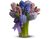 Boston Flowers - Fragrant Hyacinth - Bunker Hill Florist