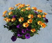 Combination Basket in Lewistown MT, Alpine Floral Inc Greenhouse