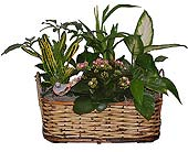 Pretty Planter Basket, picture