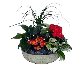 Bushel Basket Dish Garden in Dallas TX, In Bloom Flowers, Gifts and More