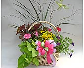 Mixed  Basket of Annuals and Perennials in Utica NY, Chester's Flower Shop And Greenhouses