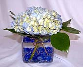 Hydrangea Centerpiece in Salisbury, Maryland, Kitty's Flowers