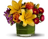 Teleflora's Blossoms of Joy in Watertown NY, Sherwood Florist