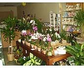TFS-03 in Fremont CA, The Flower Shop