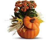 Teleflora's Harvest Pumpkin in Eldora IA, Eldora Flowers and Gifts