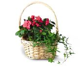 Small European Garden in Bound Brook NJ, America's Florist & Gifts
