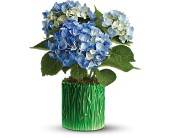 Teleflora's Grass is Greener Blue Hydrangea in Alhambra CA, Alhambra Main Florist