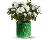Teleflora's Grass is Greener White Azalea in Salt Lake City UT, Especially For You