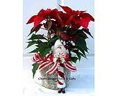 Poinsettia with Santa Ornament in Lake Forest CA, Cheers Floral Creations
