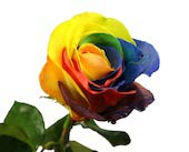 TYE DYE ROSES<br>Local Delivery in Wichita&nbsp;KS, Tillie's Flower Shop