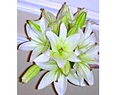 Beautiful White Lilies in Pasadena, Maryland, Maher's Florist