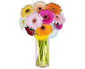 Gerbera Medley
