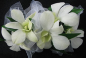 WHITE DENDROBIAN ORCHID CORSAGE in Ossining NY, Rubrums Florist Ltd.