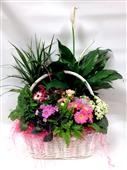 Bloomin Basket in Belleville ON, Live, Love and Laugh Flowers, Antiques and Gifts