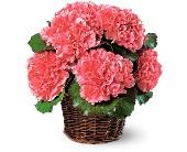 Carnation Expression in Chicago IL, Prost Florist