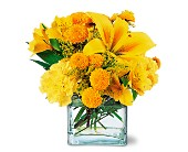 Sunshine Thoughts in Greensboro NC, Send Your Love Florist & Gifts