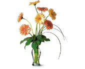 Grand Gerberas in Nationwide MI, Wesley Berry Florist, Inc.