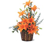 Asiatic Lilies in Wake Forest NC, Wake Forest Florist