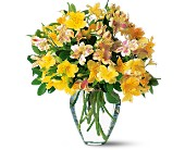 Sparkling Alstroemeria in Gadsden AL, Ideal Flower Shop