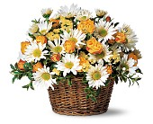 Joyful Roses and Daisies in Charleston SC, Bird's Nest Florist & Gifts