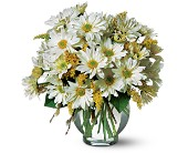 Daisy Cheer in San Clemente CA, Beach City Florist