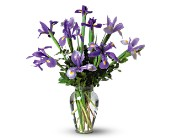 Incredible Iris in East Amherst NY, American Beauty Florists