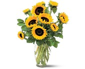 Shining Sunflowers in Cicero NY, Guignard Florist